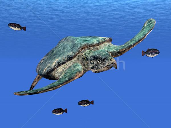 óriás tenger teknős számítógép generált 3d illusztráció Stock fotó © MIRO3D