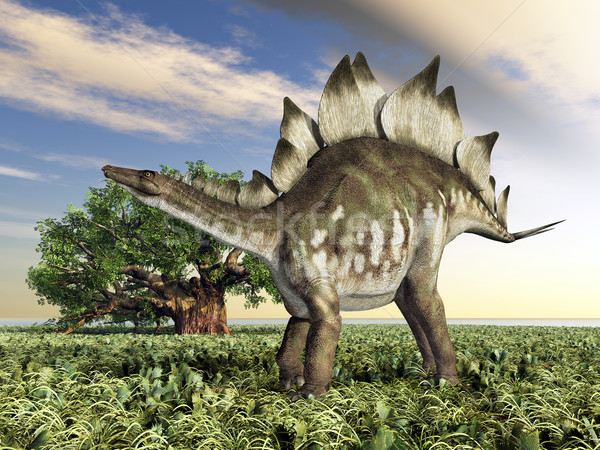 Dinosaur Stegosaurus Stock photo © MIRO3D