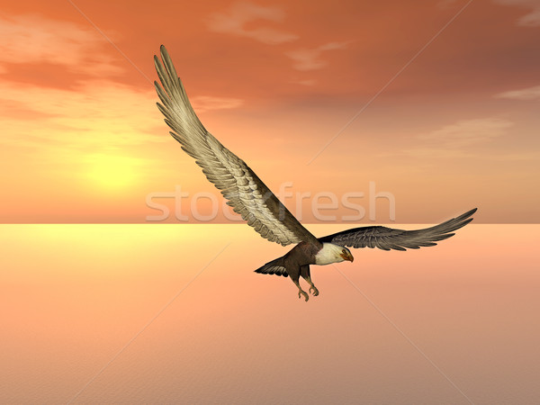 Sea Eagle Stock photo © MIRO3D