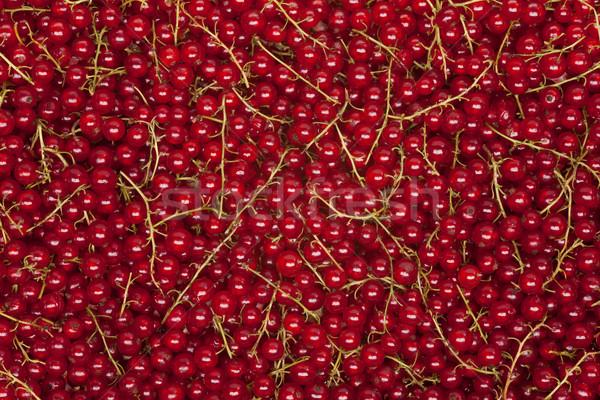 redcurrant background Stock photo © MiroNovak