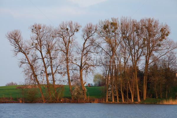 Tájkép fák tó vidéki díszlet zöld Stock fotó © MiroNovak