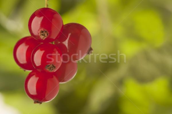 Groselha verde naturalismo jardim fundo Foto stock © MiroNovak