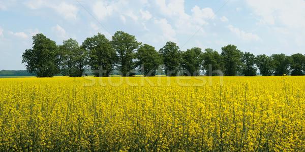 Zdjęcia stock: Panorama · dziedzinie · panoramiczny · zdjęcie