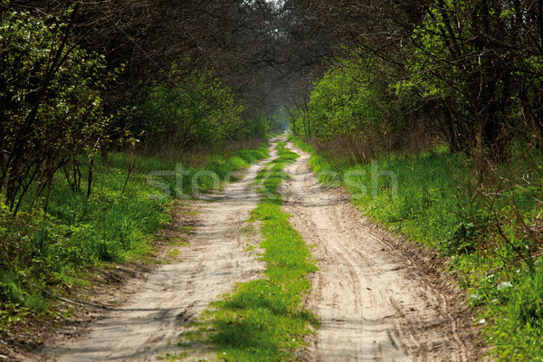 sandy road in forest Stock photo © MiroNovak
