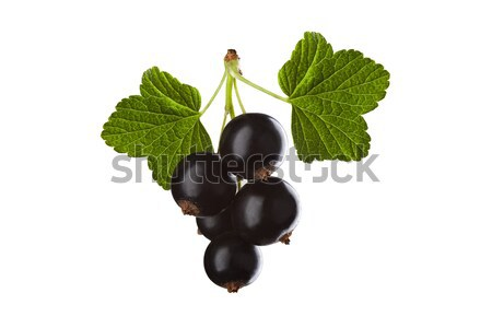 blackcurrant isolated on white background Stock photo © MiroNovak
