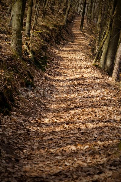 Erdő út őszi festői vidéki út Stock fotó © MiroNovak