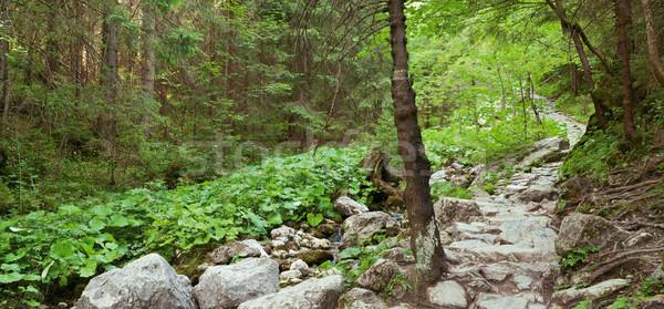 Hegy út erdő panorámakép tájkép fa Stock fotó © MiroNovak
