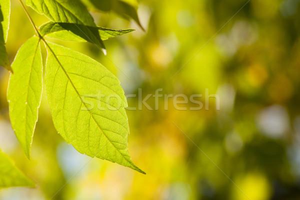 autumn background Stock photo © MiroNovak