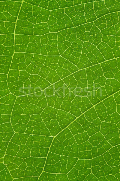 Arbre feuille vert organique naturelles texture Photo stock © MiroNovak