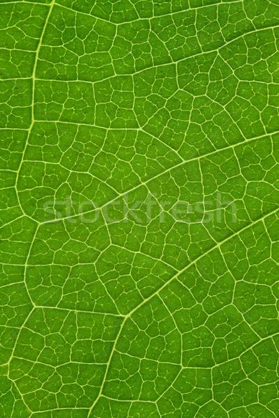 ツリー 葉 緑 オーガニック 自然 テクスチャ ストックフォト © MiroNovak
