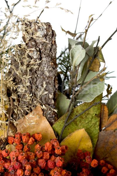 Foto d'archivio: Autunno · colori · albero · foglia · arancione · rosso