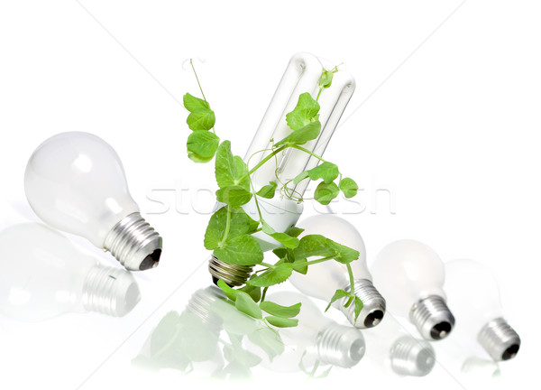 Green energy  Stock photo © mirusiek