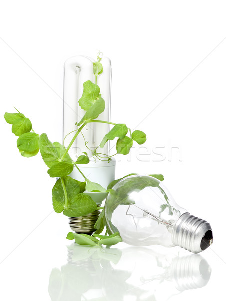 Old and new bulb Stock photo © mirusiek