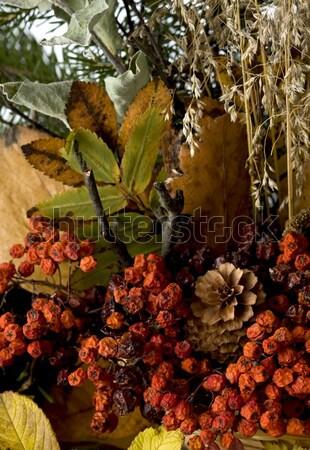Autumn leafs Stock photo © mirusiek