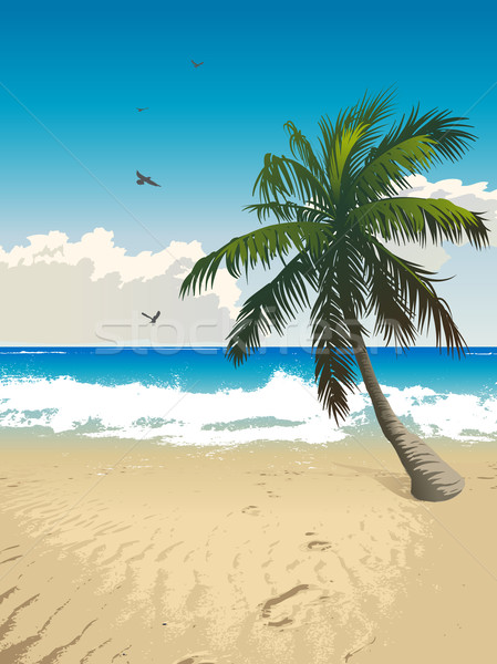 Tropical beach Stock photo © Misha