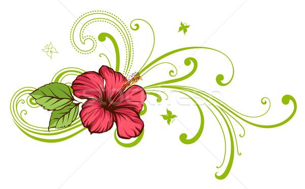 Hibisco flor tropical flor verde vermelho Foto stock © Misha