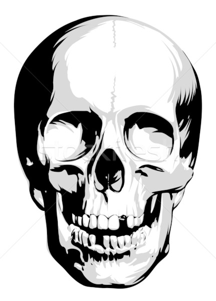 Vector skull Stock photo © Misha