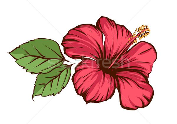 Hibiscus fleur tropicale fleur vert rouge tropicales Photo stock © Misha
