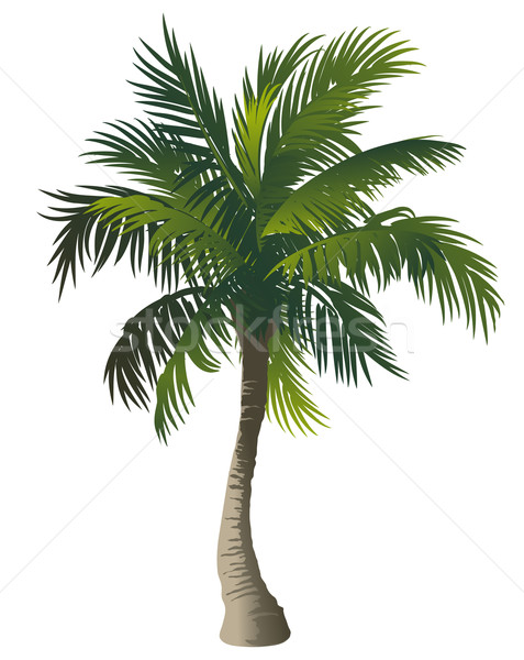 Palm Stock photo © Misha