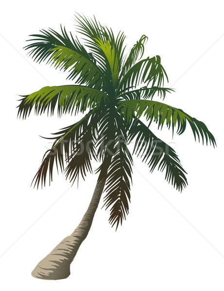 Palm tree Stock photo © Misha
