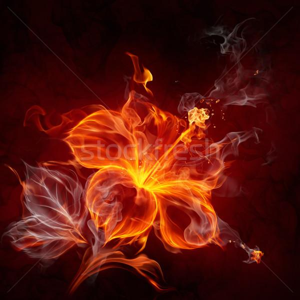 Fire flower Stock photo © Misha