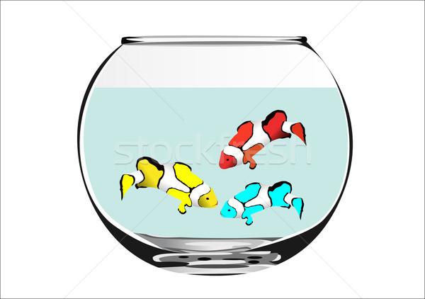 Hal akvárium fehér természet otthon élet Stock fotó © mitay20