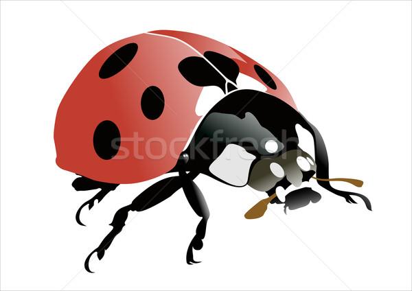 Lieveheersbeestje voorjaar oog natuur tuin Rood Stockfoto © mitay20