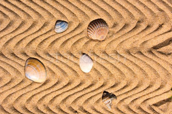 Conchiglie sabbia ondulato sole sfondo ombra Foto d'archivio © mobi68