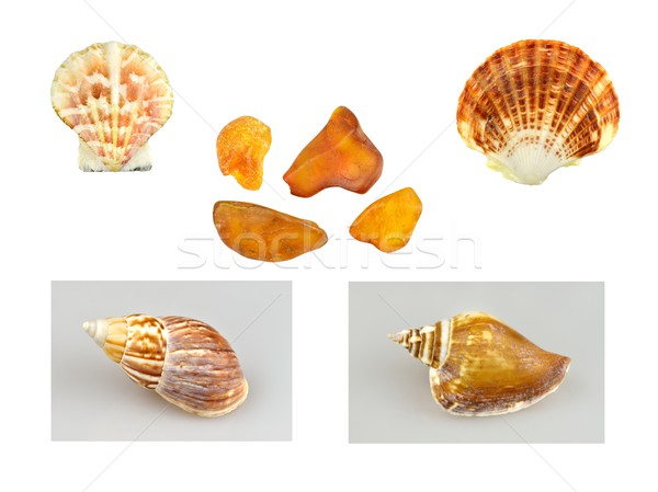 Foto stock: Conchas · ámbar · collage · agua · Shell · cal
