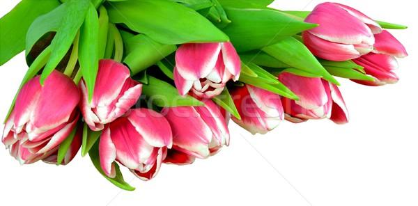Foto stock: Frescos · tulipanes · ramo · flor · verde · planta