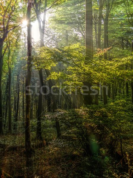 Stock fotó: Nap · sugarak · erdő · alacsony · meleg · ősz