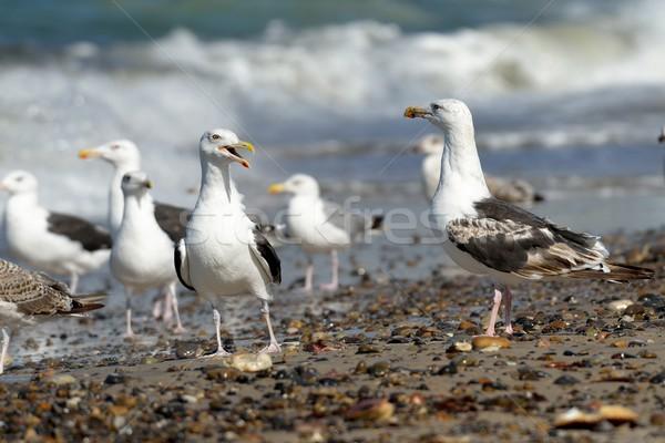 Playa grupo gaviotas agua mar aves Foto stock © mobi68