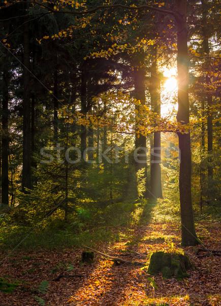 Sol forestales bajo caliente otono Foto stock © mobi68