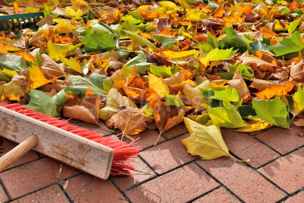 sweeping leaves Stock photo © mobi68