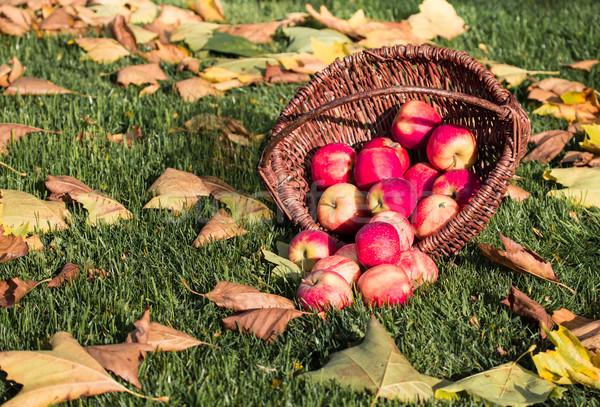 яблоко урожай плетеный корзины красный яблоки Сток-фото © mobi68