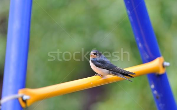 Jóvenes aves verde azul negro sesión Foto stock © mobi68