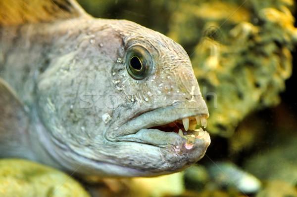 A rayas alimentos mar verde animales dentales Foto stock © mobi68