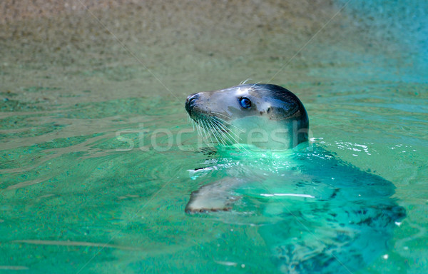 Sello agua océano retrato Foto stock © mobi68