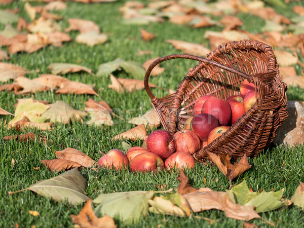 Manzana cesta rojo manzanas Foto stock © mobi68