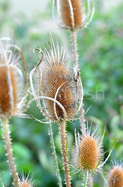 緑 工場 草原 ブラウン 植物学 ストックフォト © mobi68