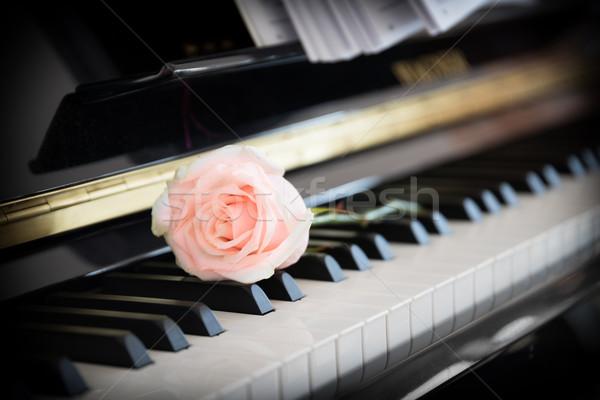 бледный Розовые розы фортепиано цветок любви заседание Сток-фото © mobi68