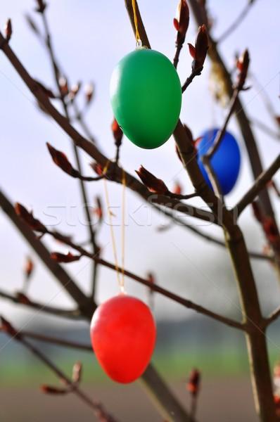 Huevos de Pascua árbol adornos cielo huevo azul Foto stock © mobi68