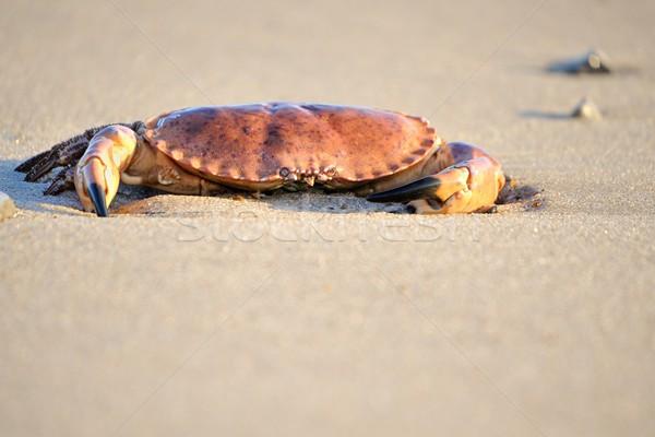 Cangrejo playa alimentos fondo océano arena Foto stock © mobi68
