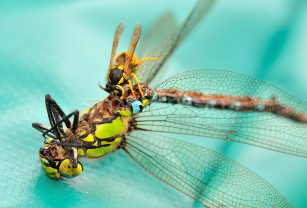 Foto stock: Avispa · libélula · muertos · negro · comer · amarillo