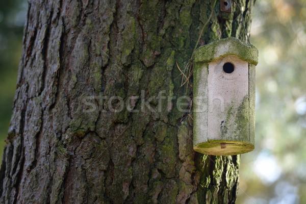 Aves casa árbol madera jardín Foto stock © mobi68