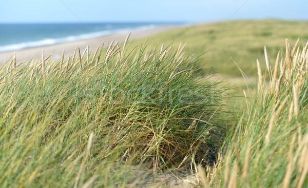 Hierba mar cielo azul arena olas Foto stock © mobi68