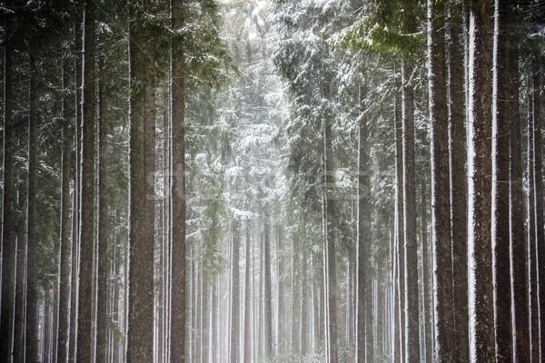 Sol invierno forestales árbol madera Foto stock © mobi68