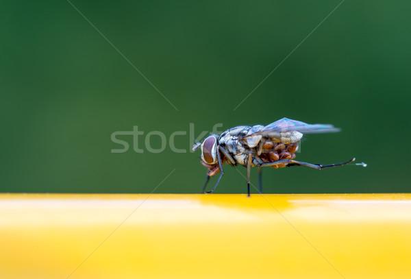 Volar macro ojo verde piernas limpio Foto stock © mobi68