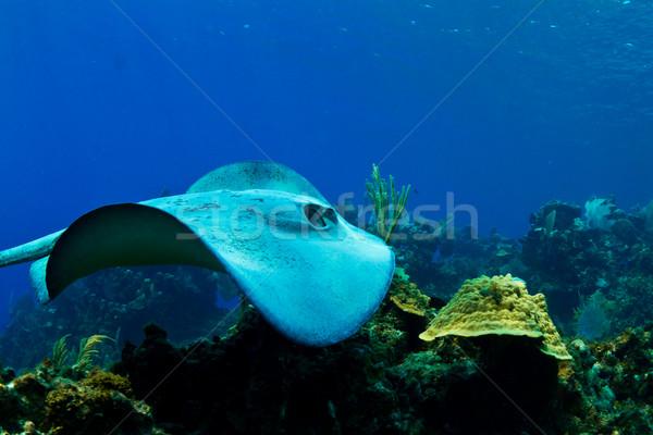 Гондурас тропические центральный Америки рыбы Сток-фото © MojoJojoFoto