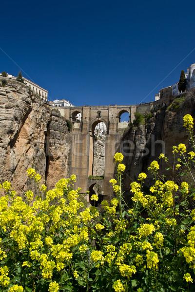 Fleur de printemps au-dessous nouvelle pont plein fleurir Photo stock © MojoJojoFoto